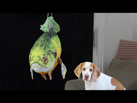 Dog Surprised by Giant Fish: Cute Dog Maymo