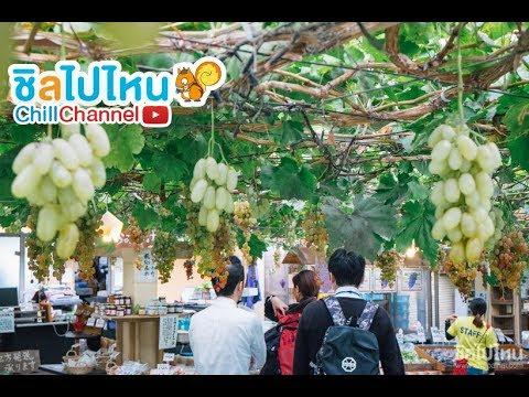 Fruit Land Shirone Grape Garden Japan เก็บองุ่นที่สวนสดๆ จากต้น
