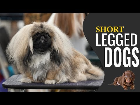Short Legged Dogs