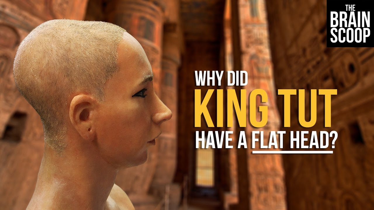 who killed king tut essay Essay about king tut curse of the mummies king tut essay king tut pre night there was a huge amount of people killedthis bear didn't want to harm.