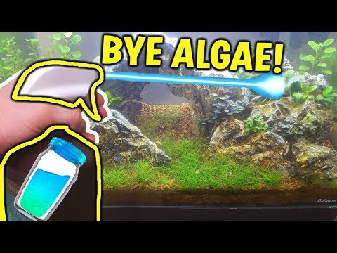THE ALGAE LaZerGuM  - Melt AWAY BBA Algae