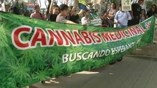 Peruvians ponder fate of medicinal cannabis