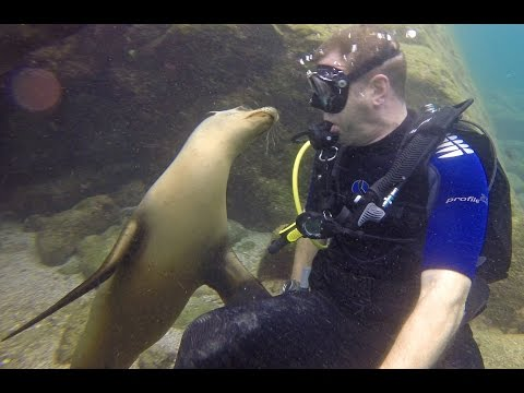 Diving and playing with Sea Lion Pups In La Paz Mexico