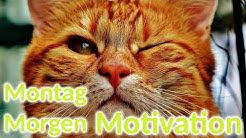 Deine Montag Morgen Motivation 🥱 Für einen guten Start in die Woche 🥳🎈💕