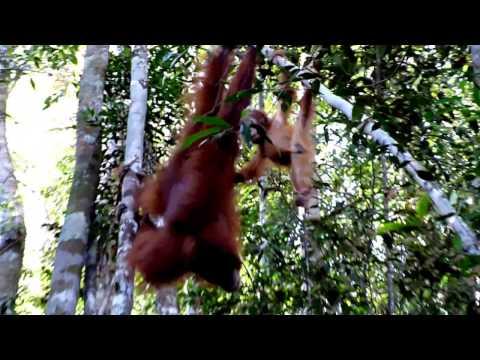 Travel – Holidays in Indonesian (North Sumatera- Sumatera Utara)