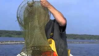 Palingvisser laat zich niet vangen
