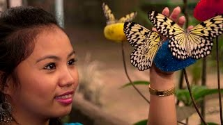 Jumalon Butterfly Sanctuary Cebu