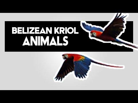 Belizean Kriol Animals