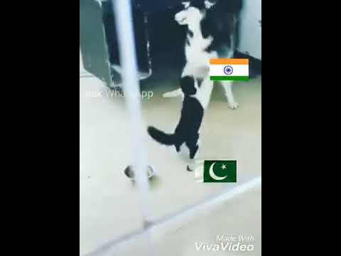 dog vs cat funny
