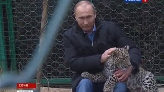 Владимир Путин. Леопард. Сочи 2014
