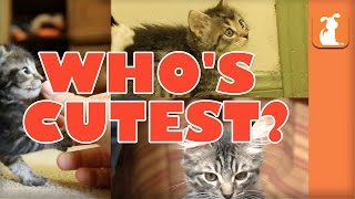 WHO'S CUTEST? YOU DECIDE! - Which Kitten is Cutest? (Episode 2)