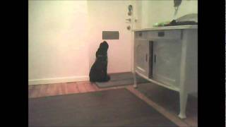 Sad Cocker Spaniel Left At Home Alone