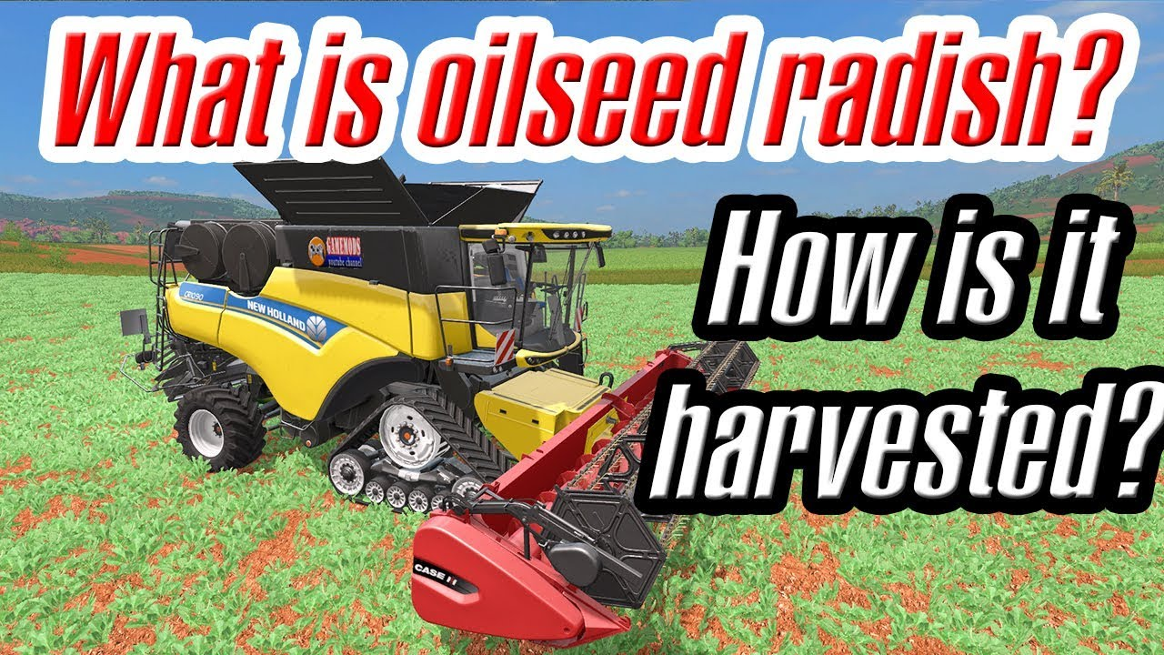 Farming Simulator 17: What is oilseed radish? How is it harvested? Have you  ever wondered?