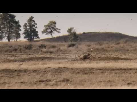 Hot Dogging - A Montana Prairie Dog Hunting Video