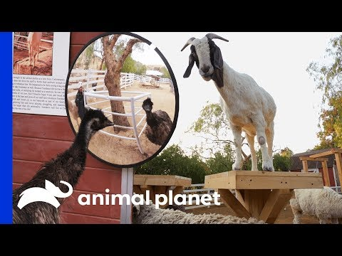 Tranquil Farm Gets Turned Into Extra Fun Animal Playground | Animal Cribs
