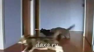 Котэ-Дрифт