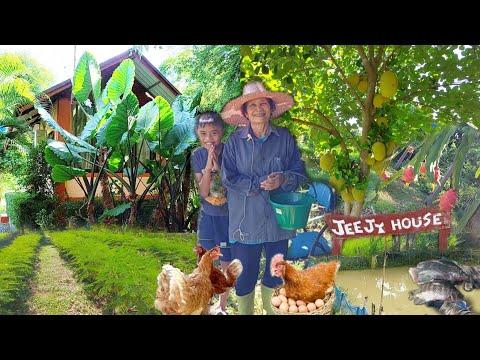 บ้านสวนเล็กๆพอเพียง 2ไร่ มีความสุขสุดๆด้วยหลักเศรษฐกิจพอเพียง ความฝันของหลายๆคน!! น่าอยู่สุดๆ