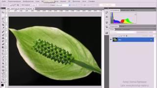 1. Знакомство с Adobe Photoshop CS5 ( 1.2 Обзор интерфейса )