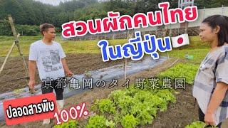สวนผักคนไทยในญี่ปุ่น เกียวโต ปลอดสารพิษ 100%!! 🇯🇵🇹🇭