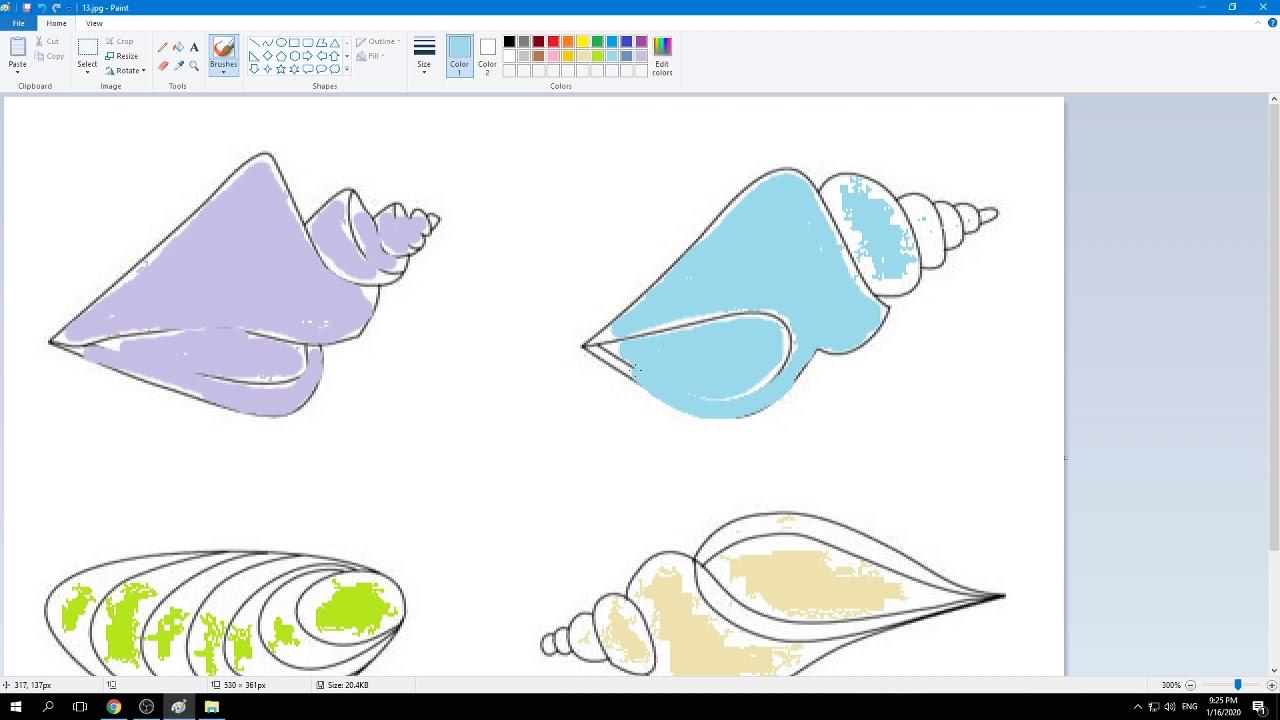 hướng dẫn tô màu vỏ ốc biển