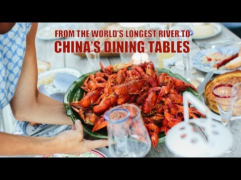 Live: Nile Crayfish - From The World's Longest River To China's Dining Tables尼罗河小龙虾到中国