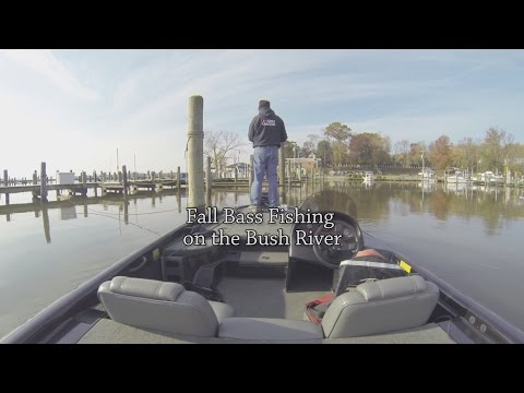 Fall Bass Fishing on the Bush River