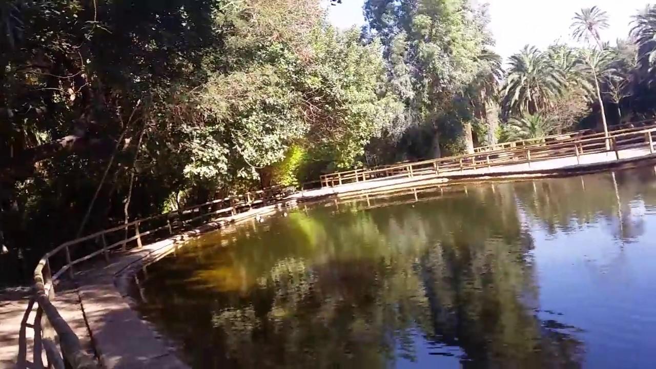 biskra algerie promenade dans le jardin landon youtube