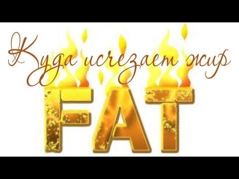 Куда при похудении исчезает жир?