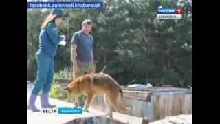 Вести-Хабаровск. Человек собаке друг