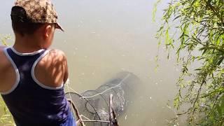 Рыбалка В Дагестане💥Поставили Ловушку➠Поймвли Сазана и Сома