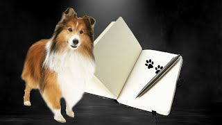 A Sheltie's Life and Times  Autobiography by a Shetland Sheepdog :: the Cricket Chronicles