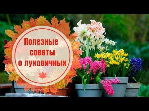 Подобрать правильную вазу - Идеи для дома - Интериз YouTube · Длительность: 2 мин47 с  · Просмотров: 274 · отправлено: 07.11.2011 · кем отправлено: Телеканал Интер (Inter TV channel)