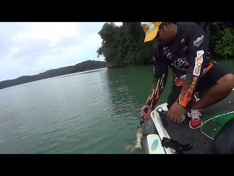 Snook C&R - Gatun Lake - Panama