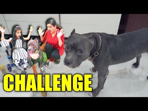 Guneet vs Brody Challenge | Funny Dog videos | Harpreet SDC