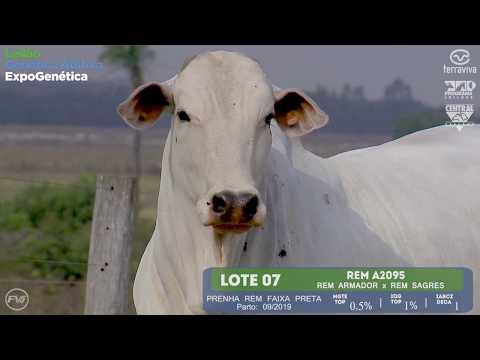 LOTE 07 - Leilão Genética Aditiva ExpoGenética 2019