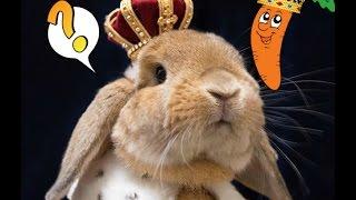 La carotte royal ! (lapino)
