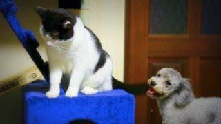 箱が気になる猫と猫が気になる犬。まさかの三角関係。 The dog which th...