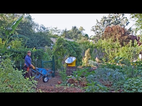 Backyard Forest backyard food forest tour (year 4) - youtube