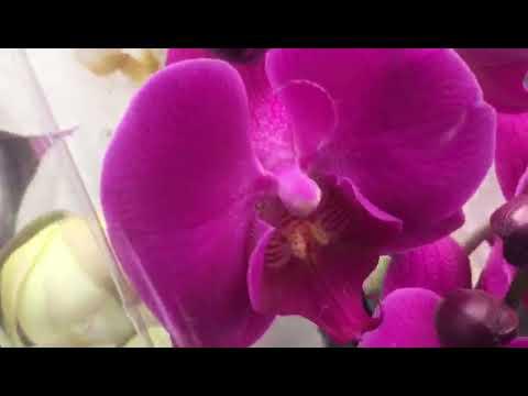 Орхидеи.Купить недорого.Эпицентр в Днепре