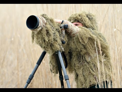 how-to-become-a-wildlife-photographer