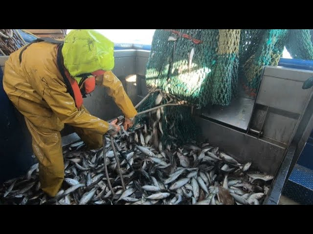 Reporters: Brexit, a sea of uncertainty for fishermen