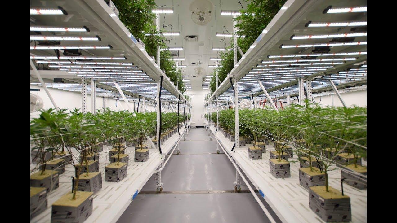 Fluence Grow Lights at Franklin BioScience Cannabis