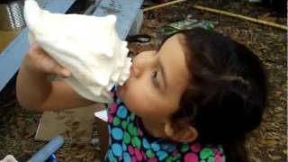 conch shell horns | How to Blow a Conch Shell Horn | How to Make a Conch Shell Horn