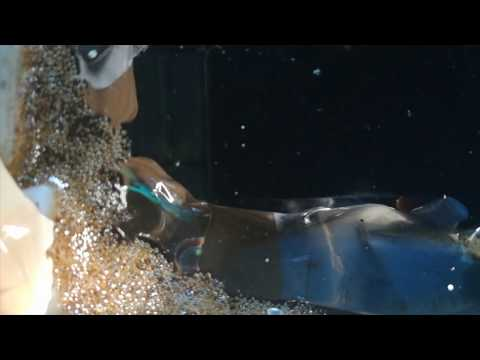 Betta fish community tank Breeding video Malayalam .Fish food  https://amzn.to/2Nw04bI