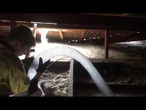 Insulation Removal Perth - Falcon Roof Space Full Of Old Insulation & Leaves!