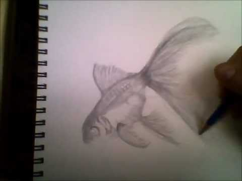 drawing-a-goldfish