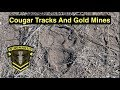 Metal Detecting - Treasure Hunting Cougar Tracks and Gold Mines - A Wingman115 Adventure