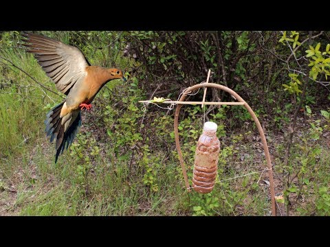 Awesome Quick Survival traps and snares - How To Make The Ojibwa Bird Trap Work 100%