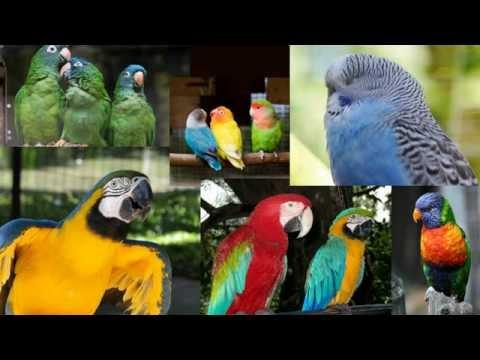Aviary Building Tips