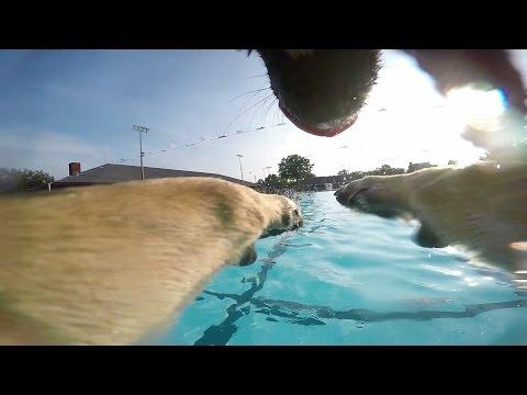 German Shepherd GoPro Pool Party